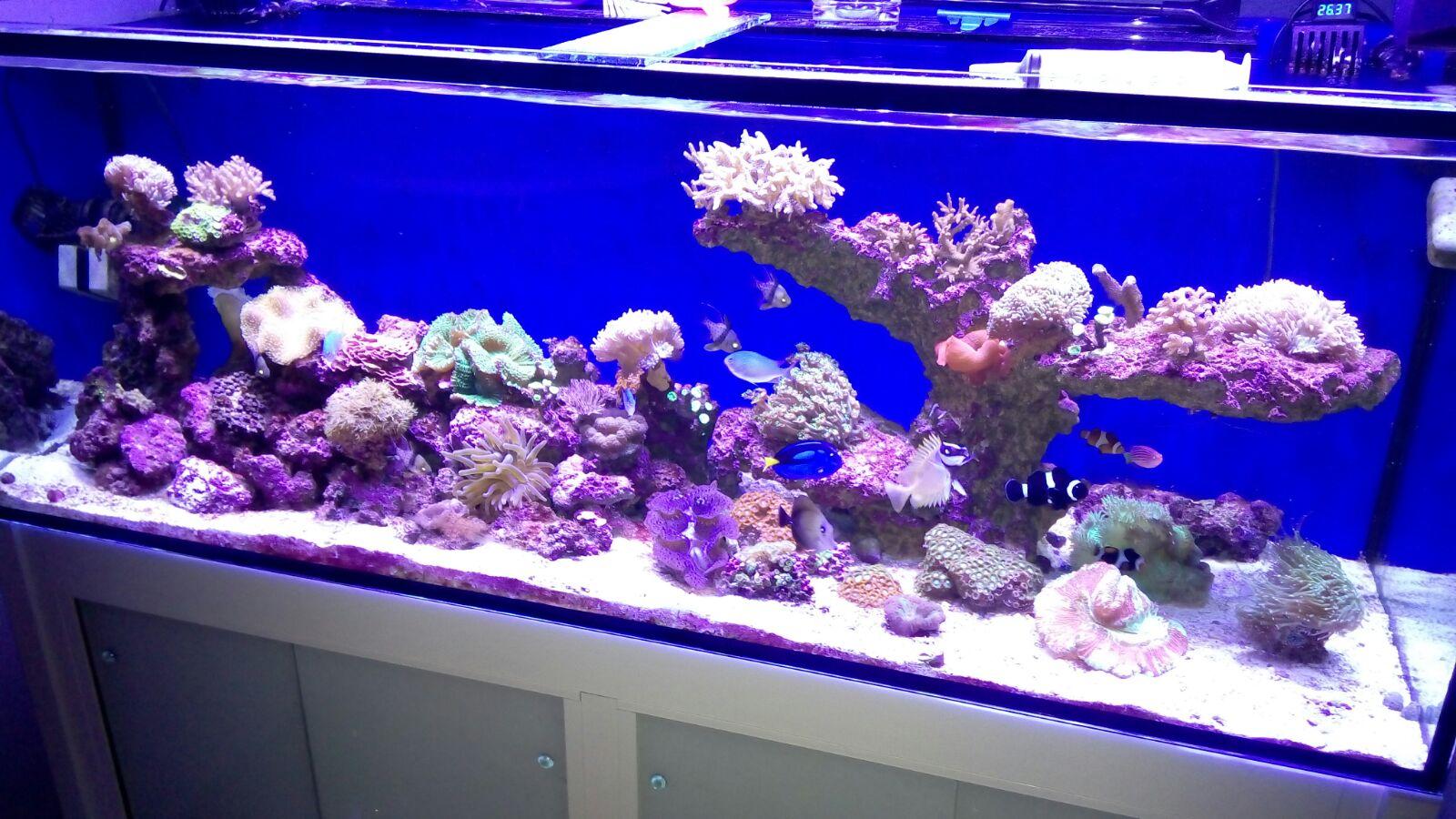 acuario oscar CR principal
