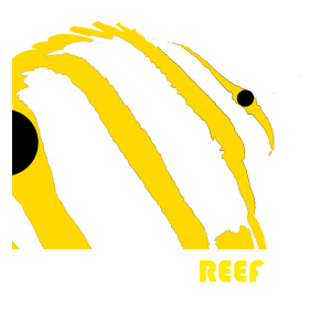 Hooked on Reef